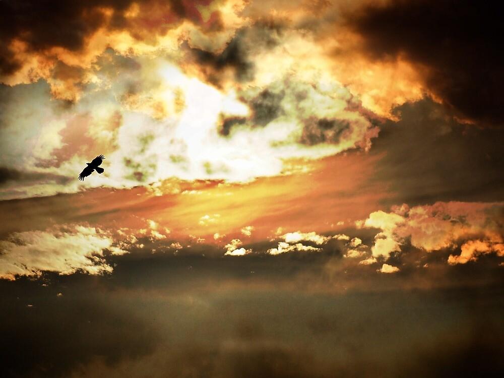 Flight  by DerekEntwistle