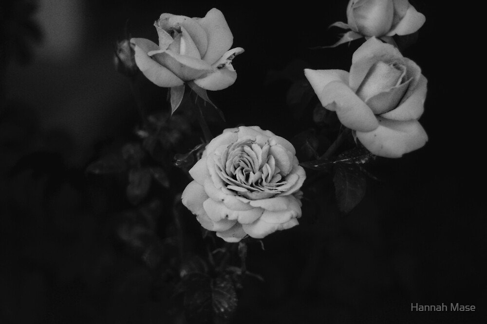 Black & White Roses by steelyhan