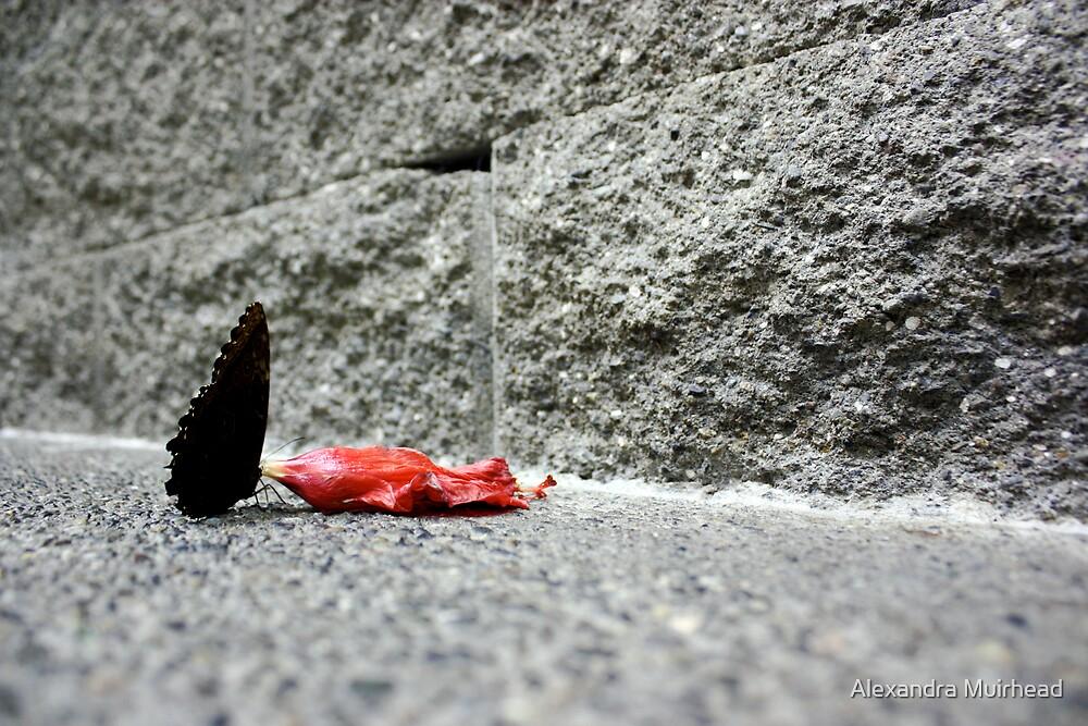 Butterfly on Concrete by Alexandra Muirhead