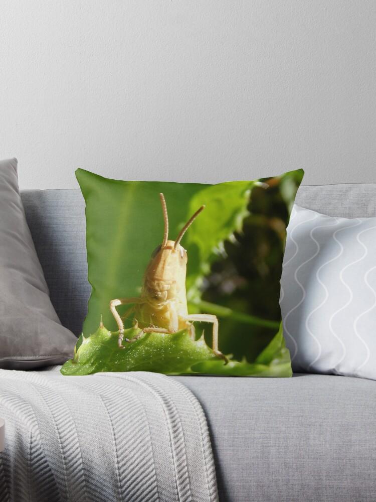 Curious Grasshopper by Dstout1987
