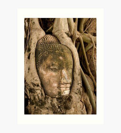 Budda Head in Roots Art Print