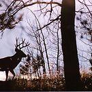 Nature's Grace by mwmclaren