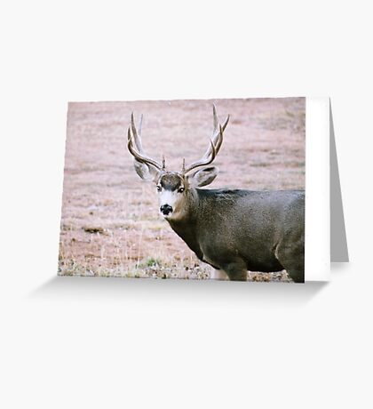 Looking for Someone Who is Looking for Me! Greeting Card