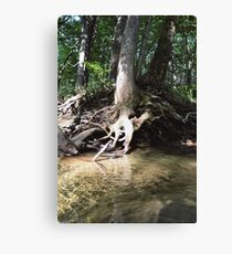 Tree by the water  Canvas Print