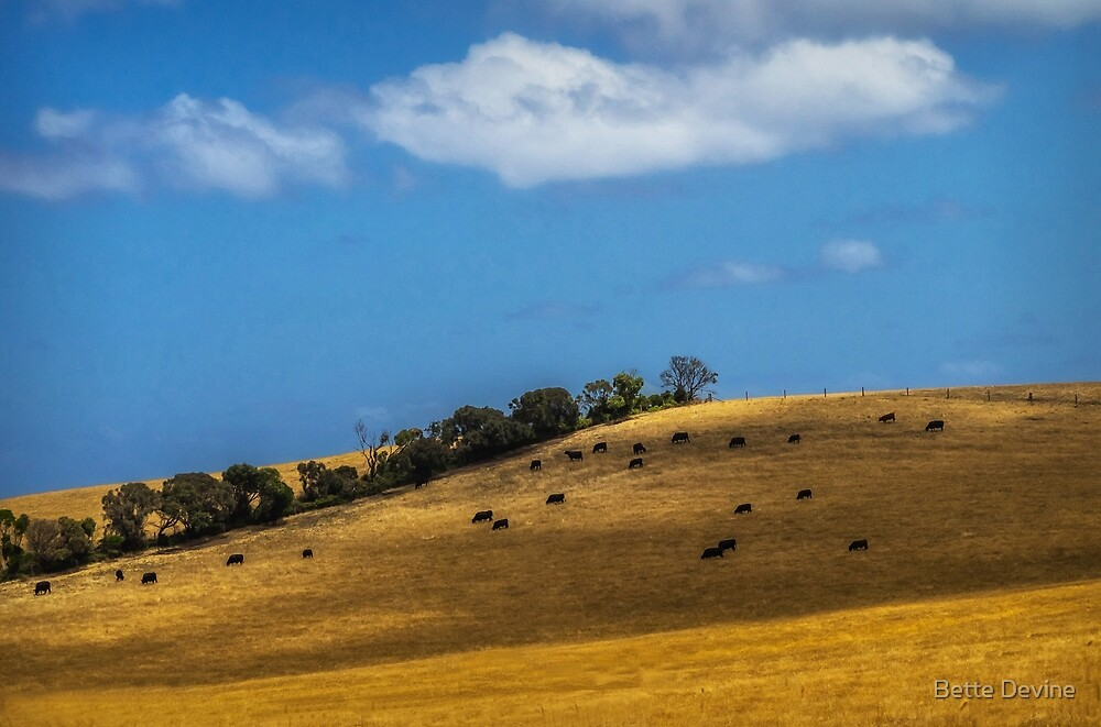 Cattle on a Hill by Bette Devine