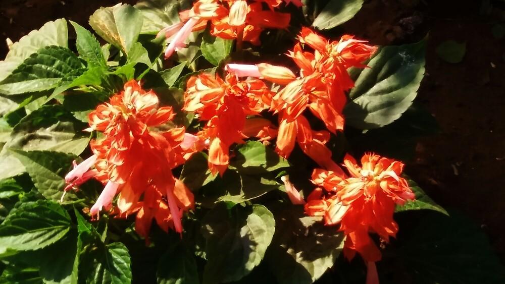 Lovely flowers by Nilu Mishra