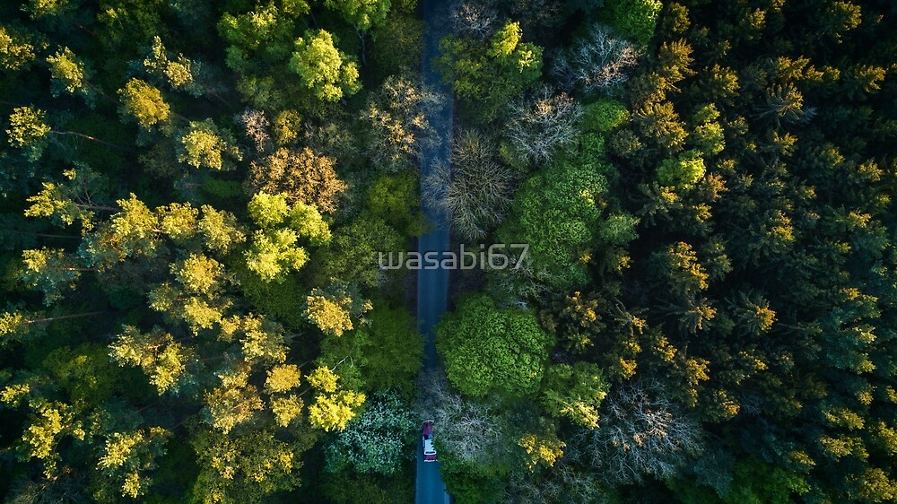 Highway To The Forest by wasabi67