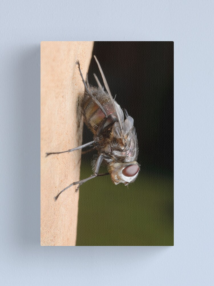 Alternate view of Tachinid Fly Canvas Print