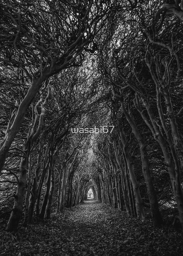 Woodland Path by wasabi67