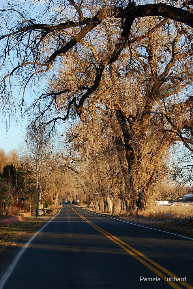 Jasper Road by Pamela Hubbard