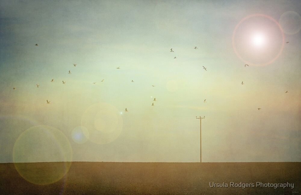 Flight by Ursula Rodgers Photography