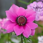 Anemone & Candy tuft by AnnDixon