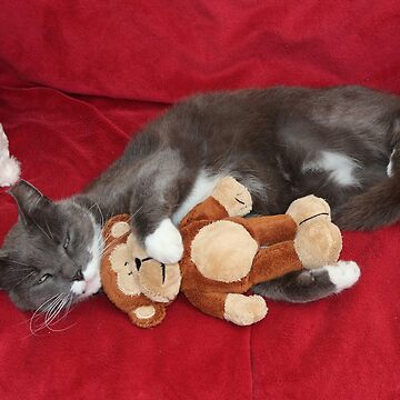 Smokey and his Toy Monkey by AnnDixon