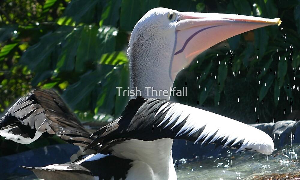 splish splash by Trish Threlfall