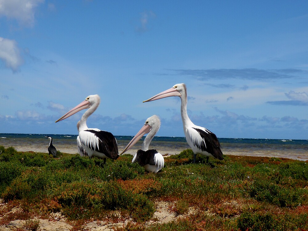 Pelican moment by SarahTrangmar