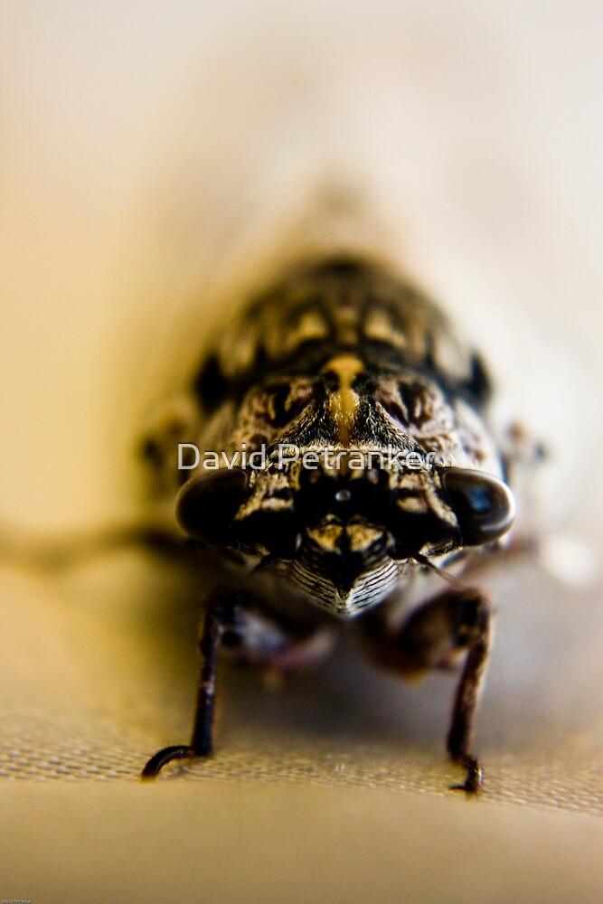 Freddy the friendly Cicada by David Petranker