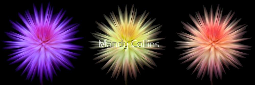 3 Dahlias by Mandy Collins