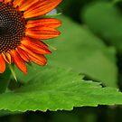 Sunflower 2009 by Roboftheland