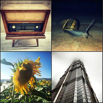 Sunflower  by Ilucim