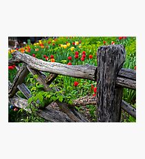 Central Park Shakespeare Garden New York City NY Wooden Fence Photographic Print