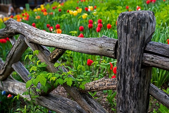Central Park Shakespeare Garden New York City NY Wooden Fence by WayneOxfordPh