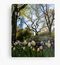 Springtime Tulips in Central Park New York City Metal Print