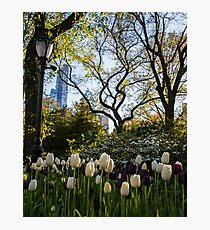 Springtime Tulips in Central Park New York City Photographic Print