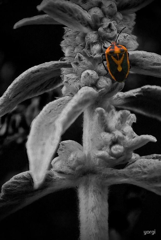 """""""Bug"""" by yorgi"""