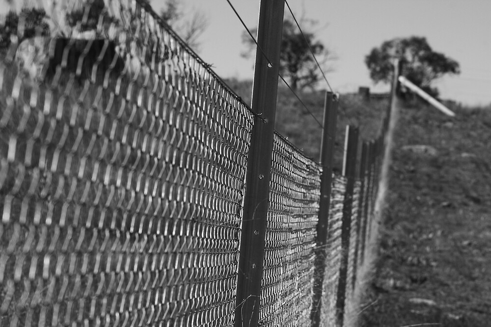 fence  by Matthew  Smith