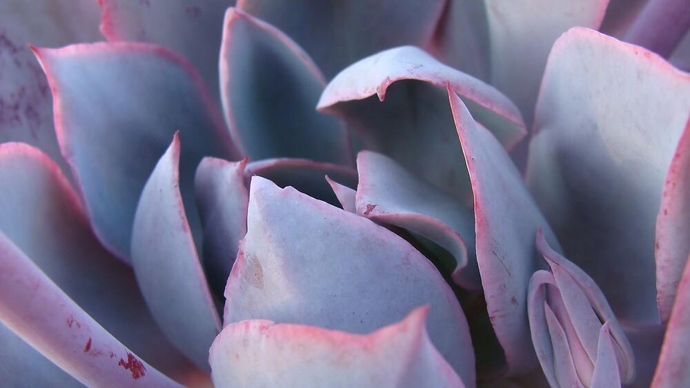 More Succulents by tillicruz