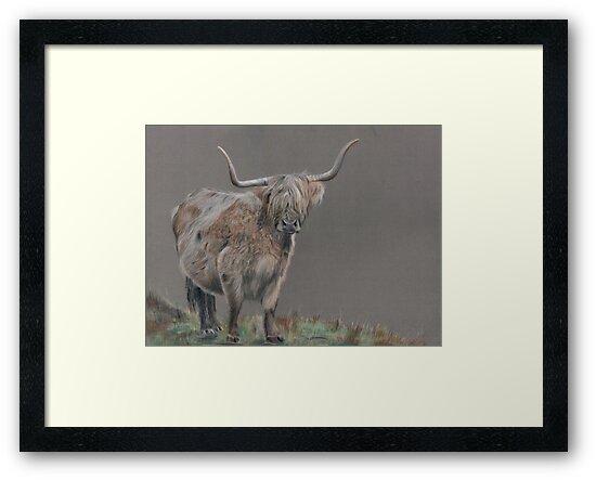 Highland cow - Highland cow by Pitema