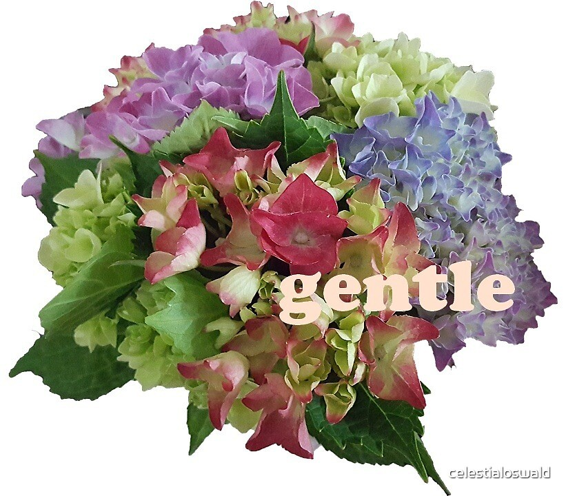 gentle. by celestialoswald