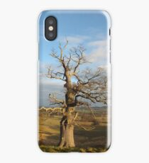 Old Oak Tree iPhone Case/Skin