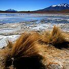 Altiplano lake under ice, southern Bolivia by Elaine Stevenson
