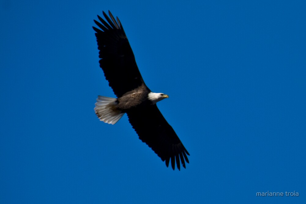 soaring above by marianne troia