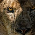 Lion by JMChown
