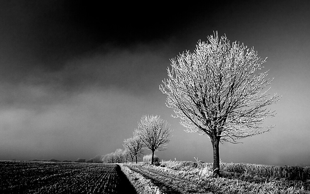 Frosted trees by SWEEPER