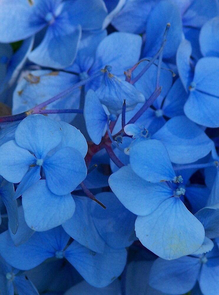 Blue by sjmphotos