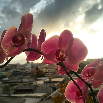 Urban orchid  by Ilucim