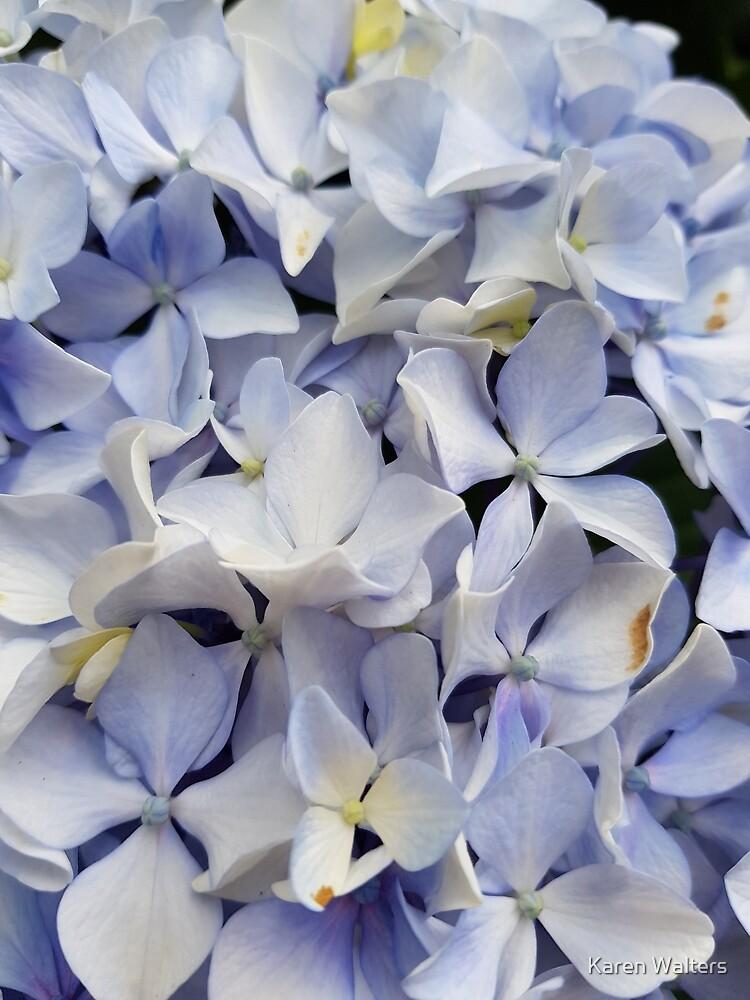 Purple flowers by Karen Walters