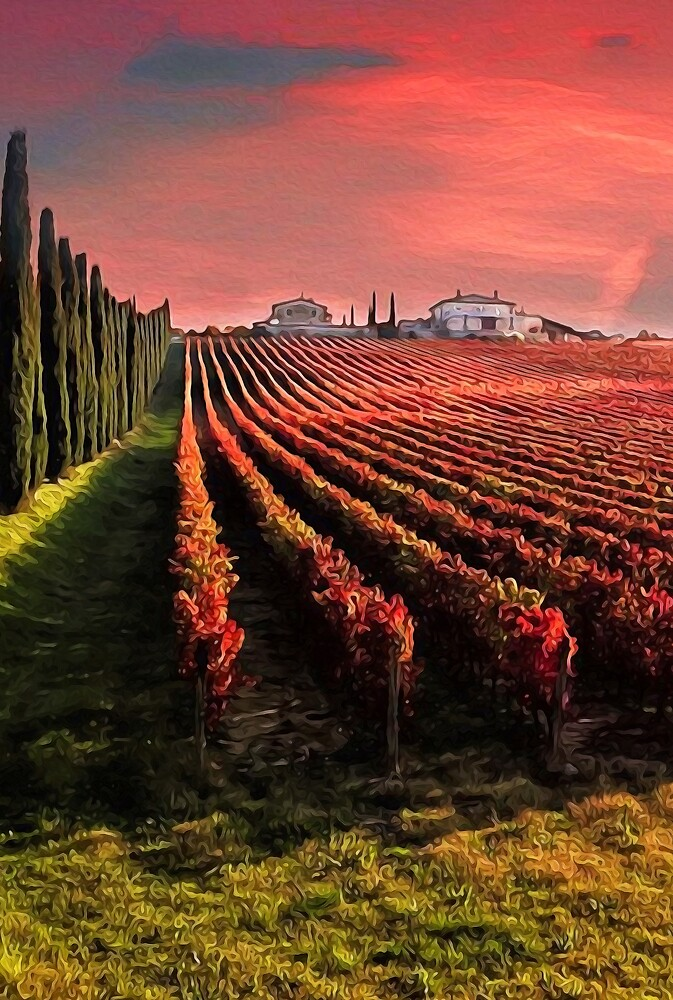 Tuscany, wineyards in autumn by Andrea Mazzocchetti