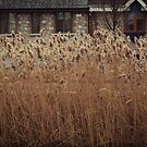 Reeds In The Wind by Walmorn