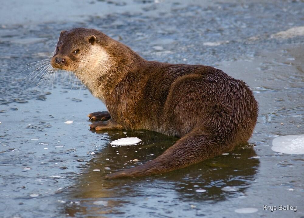 Otterly Freezing! by Krys Bailey