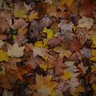 Autumn by Walmorn