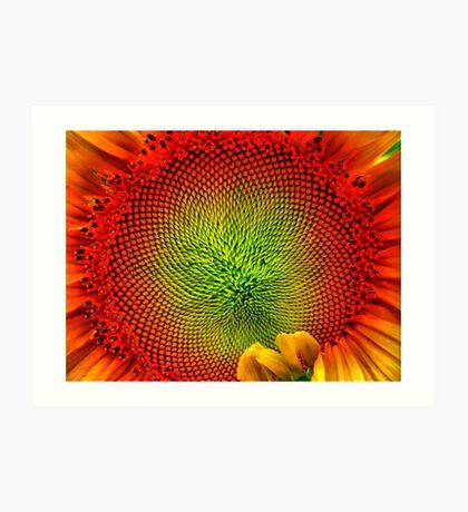 Stunflower Art Print