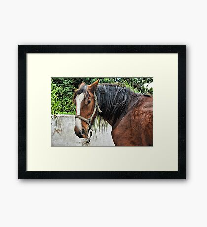 The Old Workhorse Framed Print