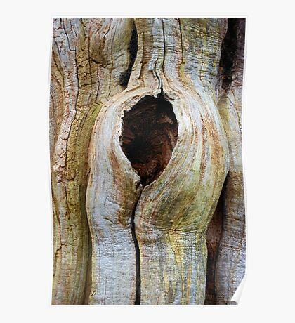 ancient oak Poster