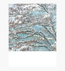 Winter Tendrils Photographic Print