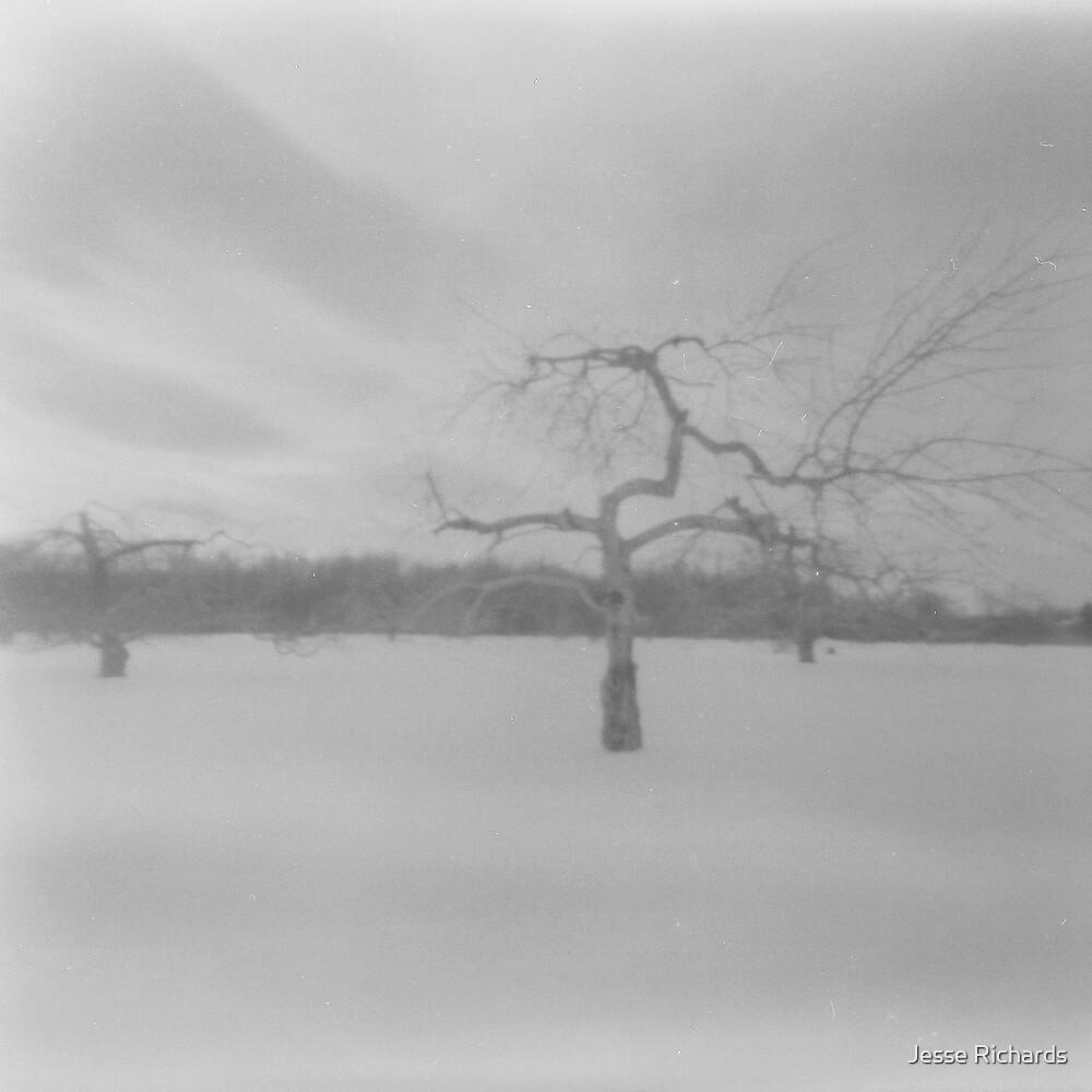 Apple Tree in Winter by Jesse Richards