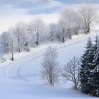 Sunny Snow Morning by Angelika  Vogel